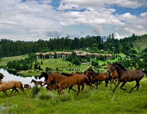 Drakensberg Sun Resort horse riding